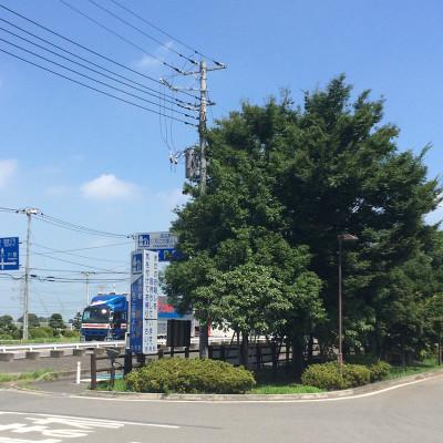 2014-08_ichigo1