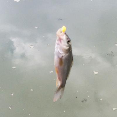 2014-10-12_fishing3