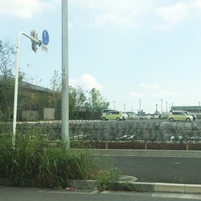 梅の花 駐車場